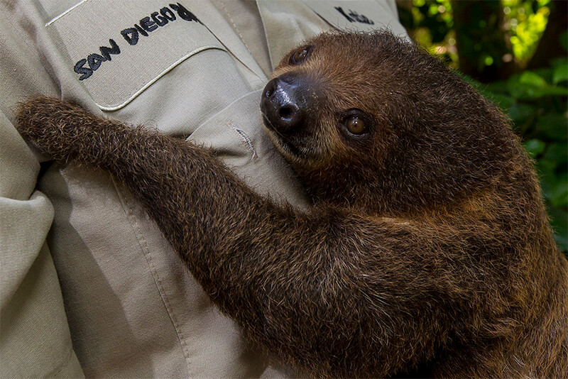 sloth being held by a wildcard specialist