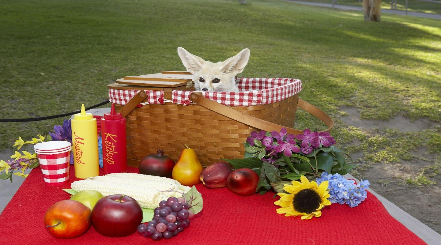 Picnic Basket with Fennec Fox peaking out.